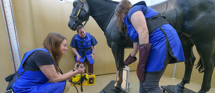 Future of Veterinary Education
