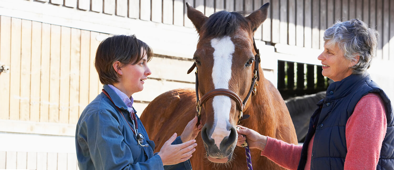 Treating Equine Lymphoma