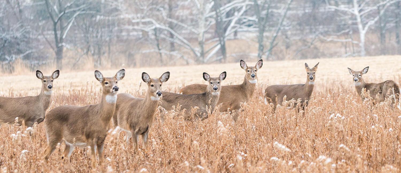 Announcing the Pennsylvania Wildlife Futures Program