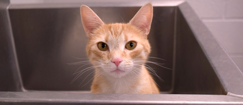 Feline Behavior Provides Insights into Animal Welfare