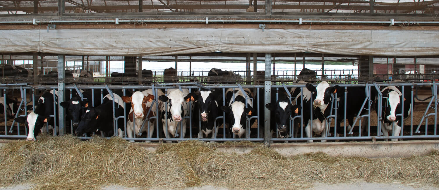 Welfare-Oriented Farm Practices Help Our Cows