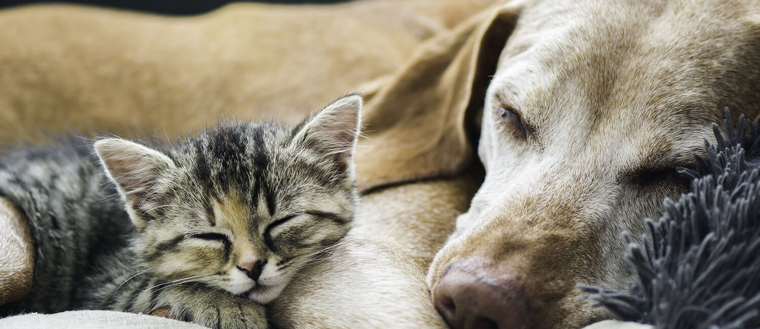 Memorial Gifts in honor of your pets
