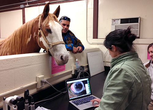 Equine Ophthalmology at New Bolton Center