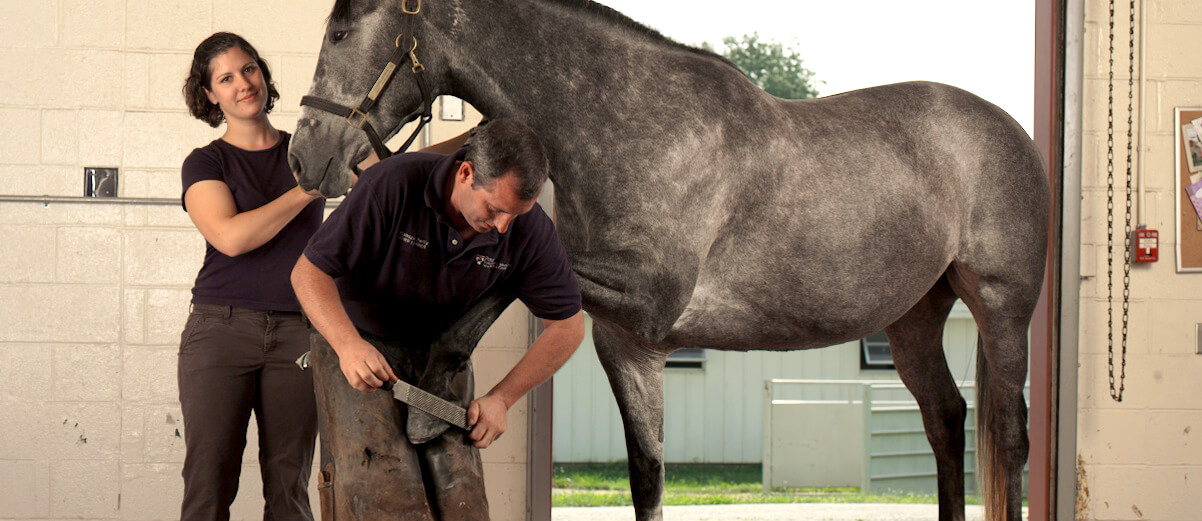 Farrier - Critical Supportive Service