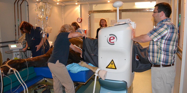 Equine MRI at New Bolton Center