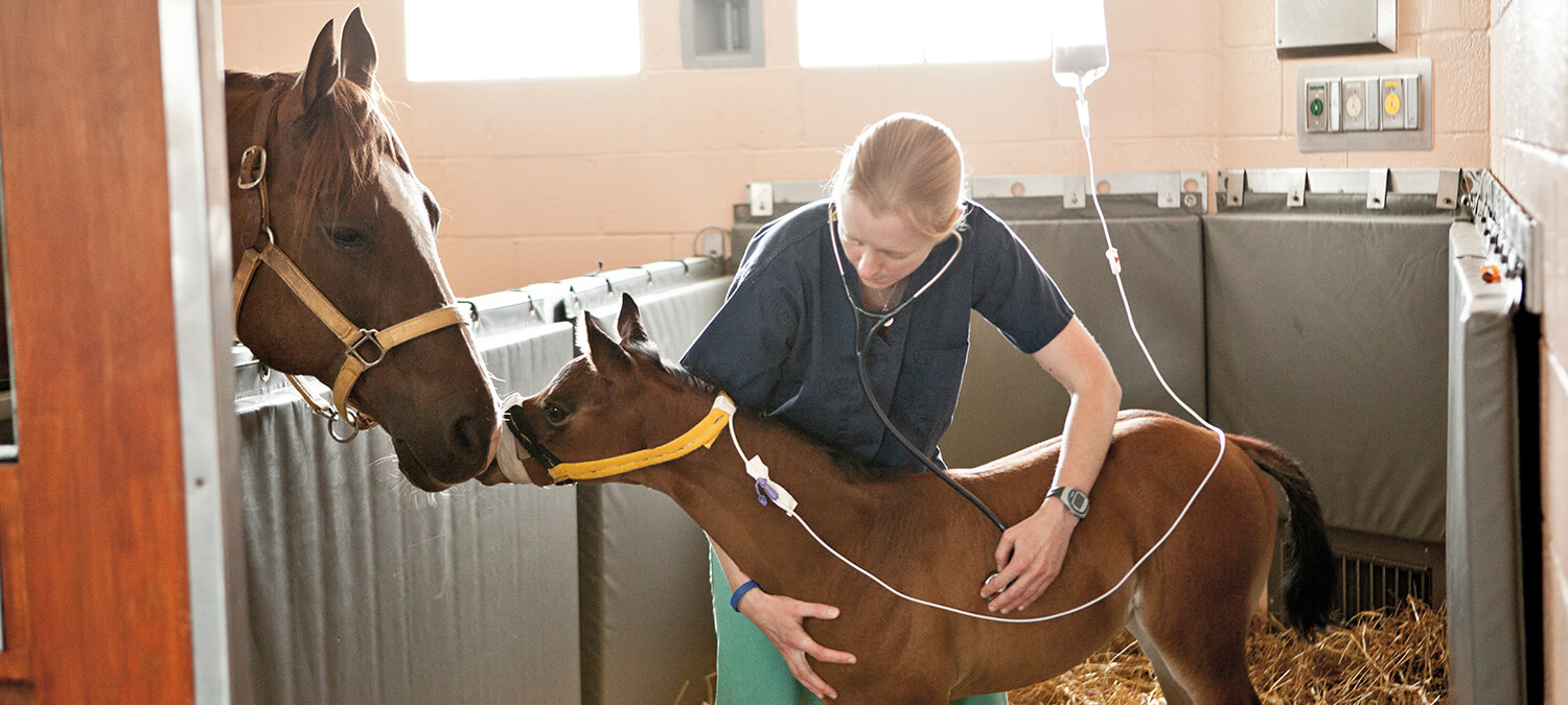 Dr. Michelle Linton with a mother and foal at New Bolton Center's NICU