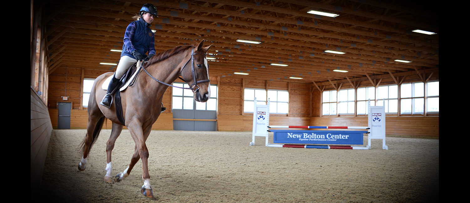 Penn Vet's Dr. Elizabeth Davidson loves a good horse mystery. She and her team of equine Sports Medicine experts at New Bolton Center have solved many cases of 'just not right' horses.