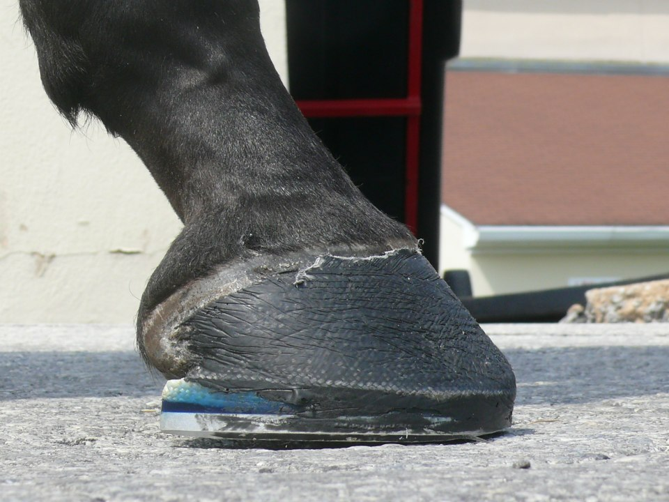 New Bolton Farrier Glue On Shoe