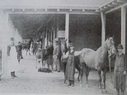 Penn Vet's Farrier Service: Beginnings