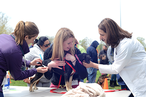 Penn Vet's Shelter Medicine volunteering at Pets For Life event on World Veterinary Day
