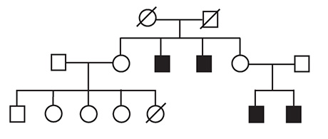 A family pedigree provided support for a Tex11 mutation causing infertility, passed down the maternal line.