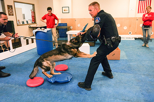 WDC Director Cindy Otto (in glasses) observes while law enforcement trainer Bob Dougherty works with Rocky, a K9 with the Jenkintown Police that was rehabbed at the Center.