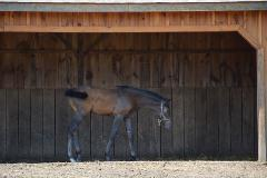 hot weather tips for horses, Penn Vet