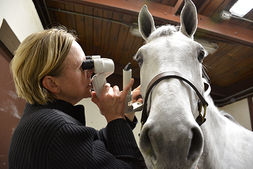 Dr. Catherine Nunnery will discuss equine vision at the next free First Tuesday lecture at New Bolton Center.