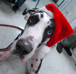 Penn Vet, holiday tips