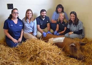 Bette poses with the New Bolton Center team that treated her.