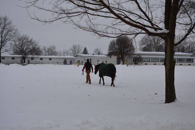Penn Vet, Cold Weather Horse Care Tips