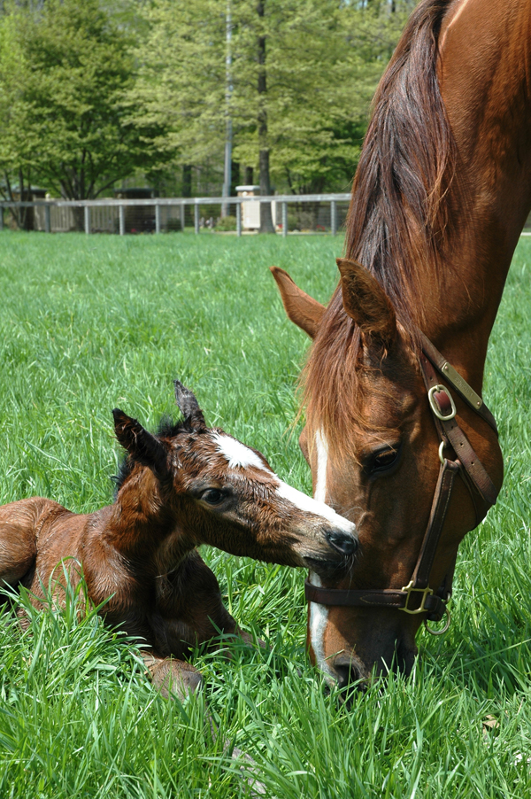 Layounne nuzzles one of her foals.
