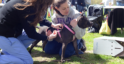 Penn Vet students vaccinate a pet dog at a Pets For Life event.