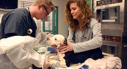Through the Richard Lichter Charity for Dogs, this shelter dog received specialized care at Ryan Hospital.