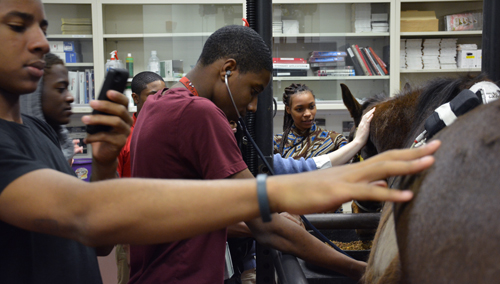 Sayre High School students, while rotating through clinics, listen to a horse's heartbeat at New Bolton Center.
