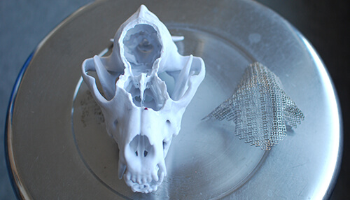 A 3D-printed model of a dog's skull used to plan a complicated surgery ahead of time.