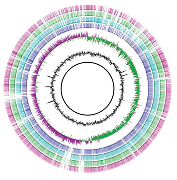 Circular alignment of bacterial genomes from Staphylococcus isolates obtained from human and animal cases.