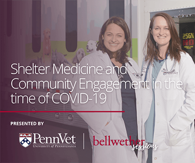 Shelter Medicine - Bellwether sessions - communities