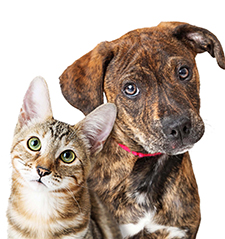 Cat and Dog for radiology CE Event