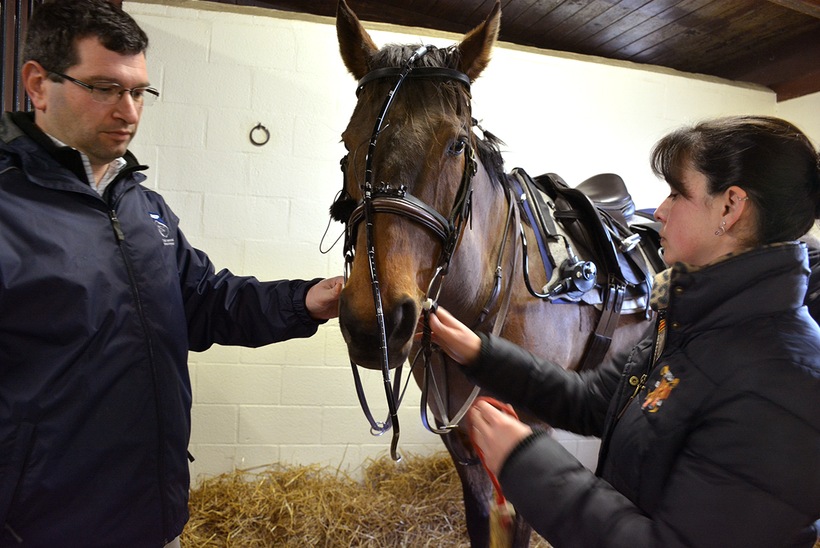 Dr. David Levine and owner Lara Geiger place the dynamic endoscope on Benji's head and saddle.