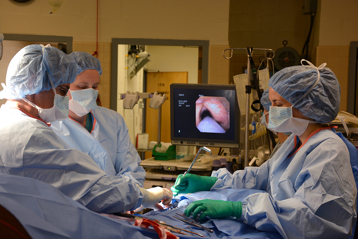 "At left, Dr. Eric Parente, assisted by an intern and student, remedies Benji's laryngeal hemiplegia with a laryngoplasty or ""tie back"" surgery."