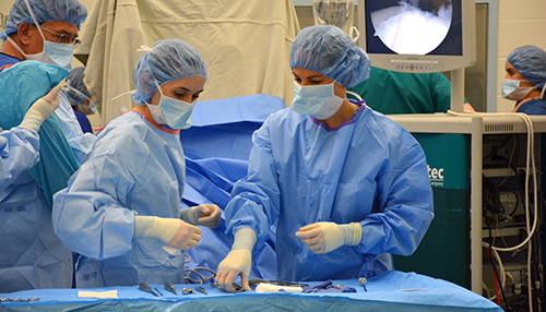 Dr. Kyla Ortved in surgery, New Bolton Center