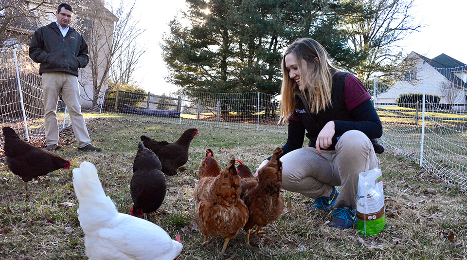 Tracy checks out Dr. David Levine's backyard chicken flock.