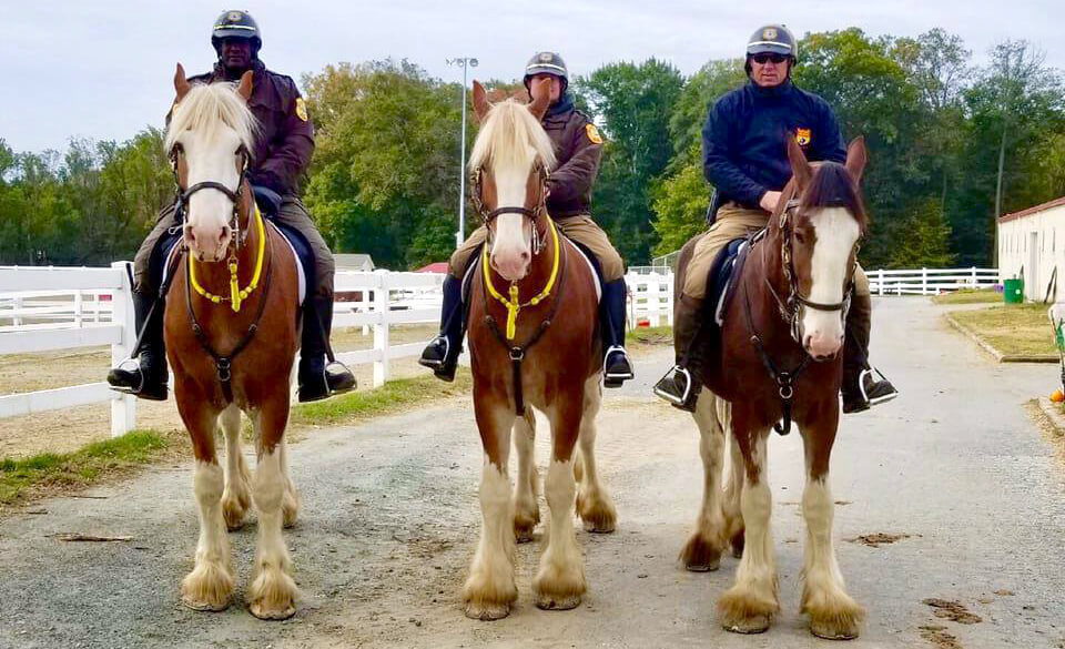 Junior, Zeep, and Julio out on a trail ride during training.