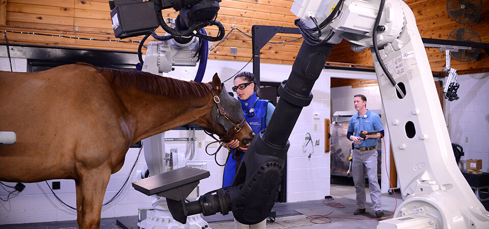 New Bolton Center sports medicine technician Heather Hunchuck assists Finnegan, owned by Amy Lambert and provided by Pine Creek Sport Horses of Chester Springs, PA, during a robotic neck scan. Josh Benson, imaging technician, is in the background adjusting the arms.