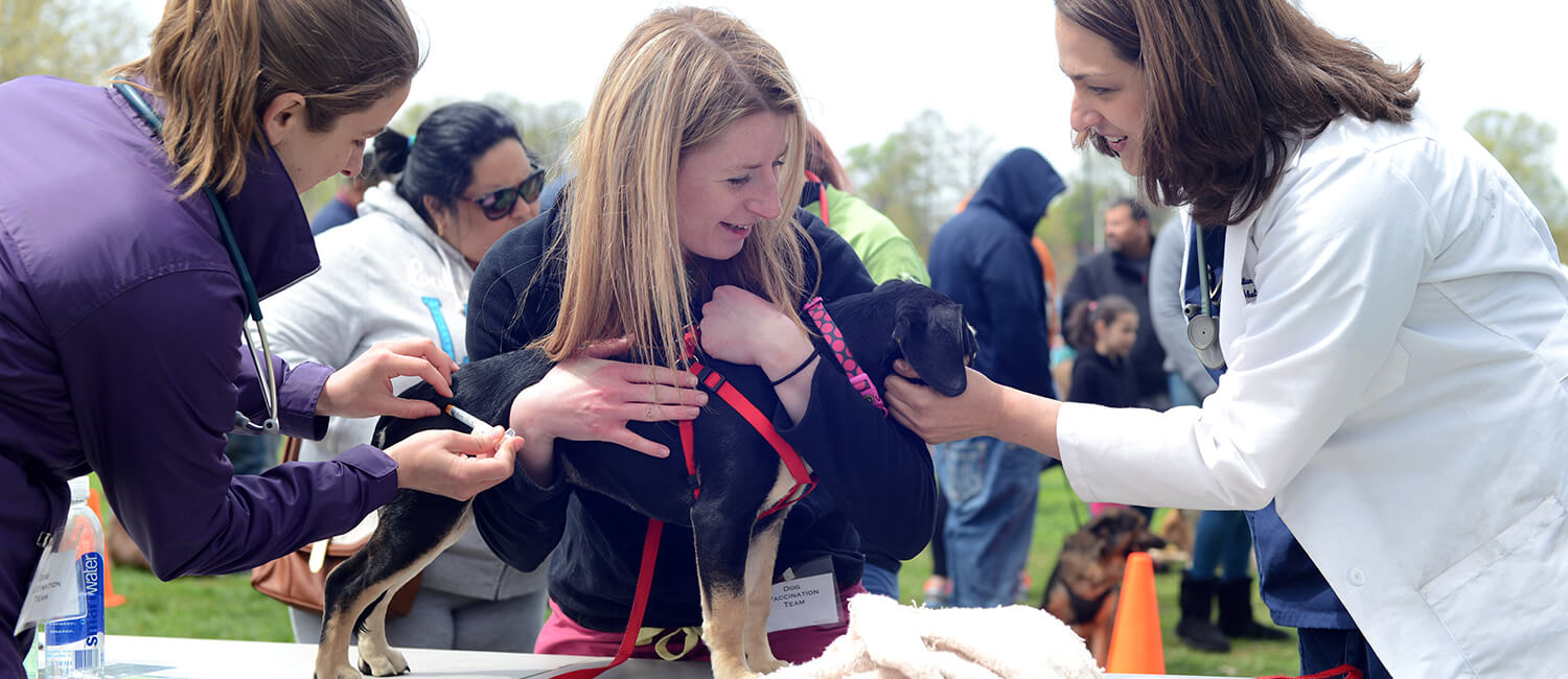 Dr. Brittany Watson (at right) supervises a vaccination given by Penn Vet students in the Hunting Park neighborhood of Philadelphia.