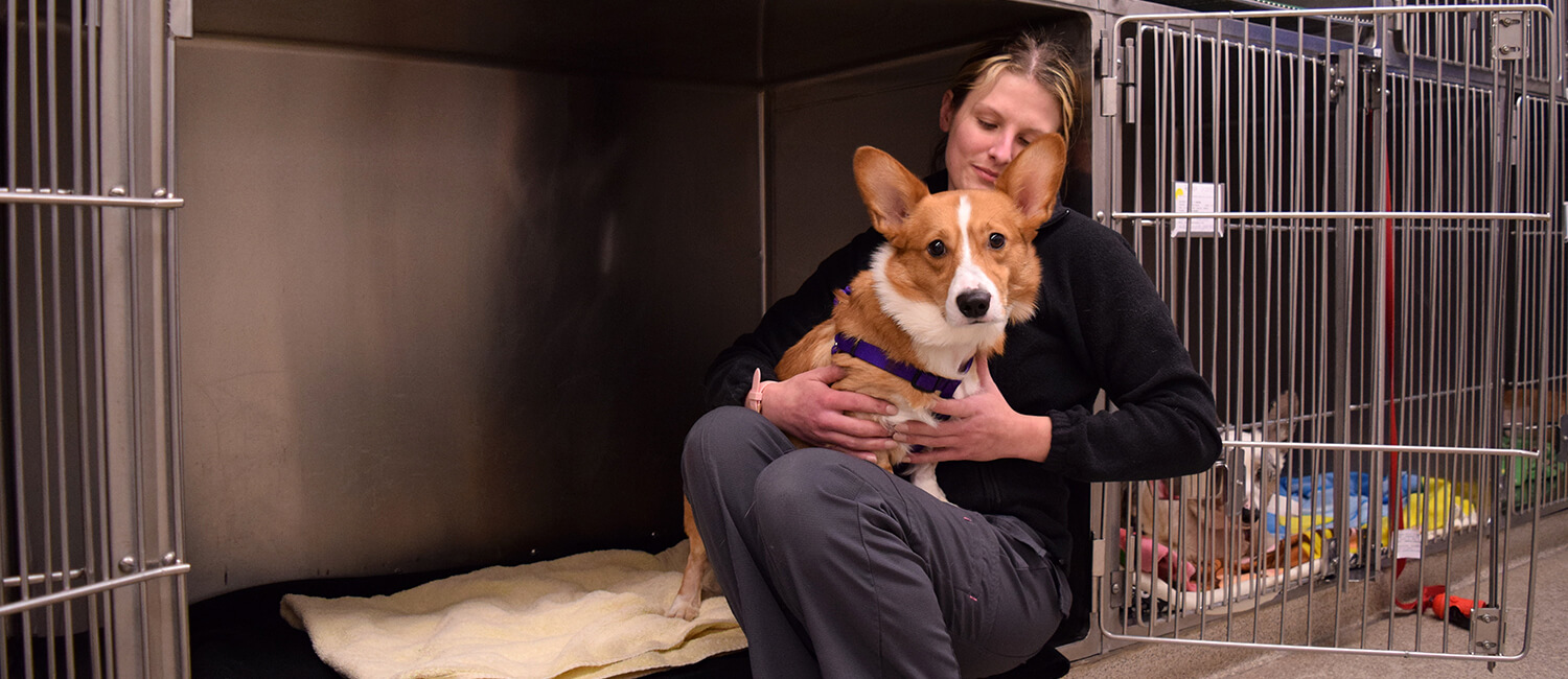 Two-year-old Dobby overcame a life-threatening obstruction thanks to Penn Vet's clinical care experts