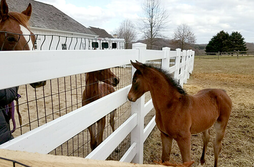 Epona Eleison and Big Man in Town meet on Gaudio's farm.