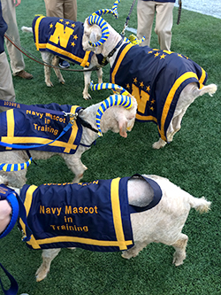 Navy mascots and mascots-in-training