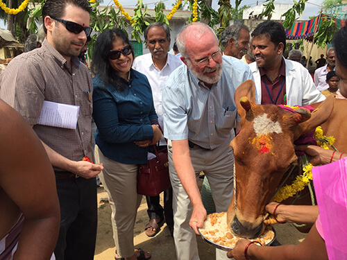 Cows are sacred in India. The Penn Vet team participates in a religious ritual performed by the local priest.