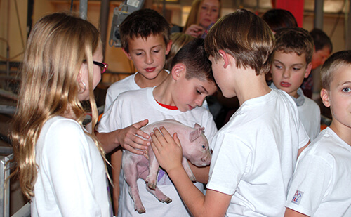 The students take turns holding the piglets