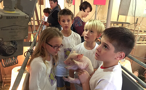 The elementary school students tour the farrowing pens to see sows with piglets