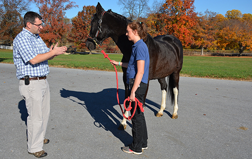 Dr. David Levine and Caitlin MacGuinness discuss Lexi's lameness evaluation