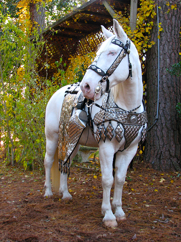 Silver posing for the camera