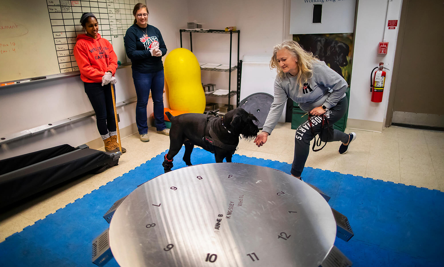 Challah, a giant schnauzer with a gifted nose, receives a treat from owner Anastasia Ayzenberg after a successful search at the scent wheel as instructor Tessa Seales and volunteer Shelby Wise look on.