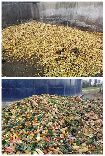 IUUB feedstuffs: Apple cores (top) from a processing facility and unsellable fruits, vegetables, and bread bread (bottom) from supermarkets are fed to cows on two Pennsylvania dairy farms (Photo credits: Dr. Joe Bender)