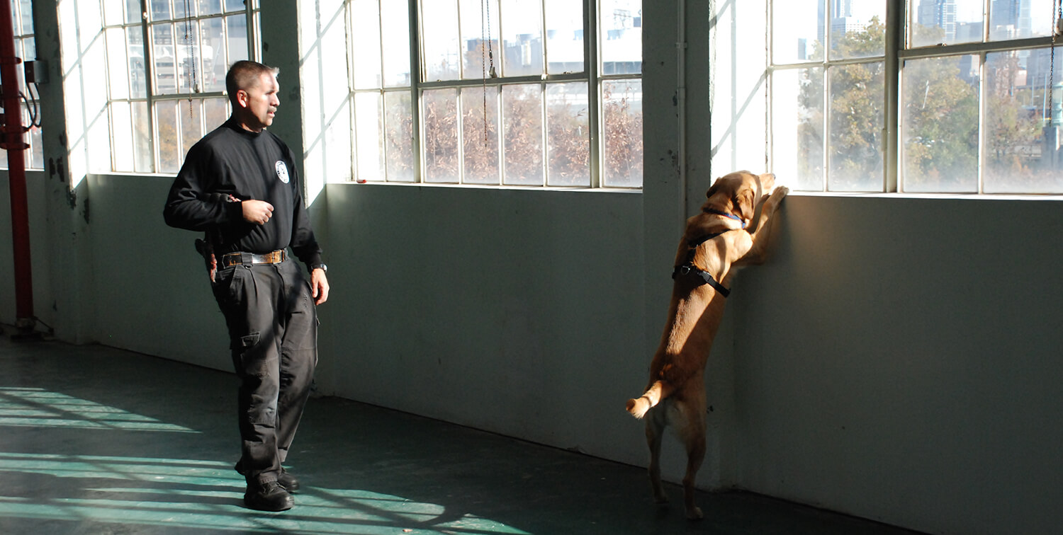 Bob Dougherty, law enforcement trainer for the Working Dog Center, helps a K9 officer in training refine scent detection skills. (Image: John Donges)