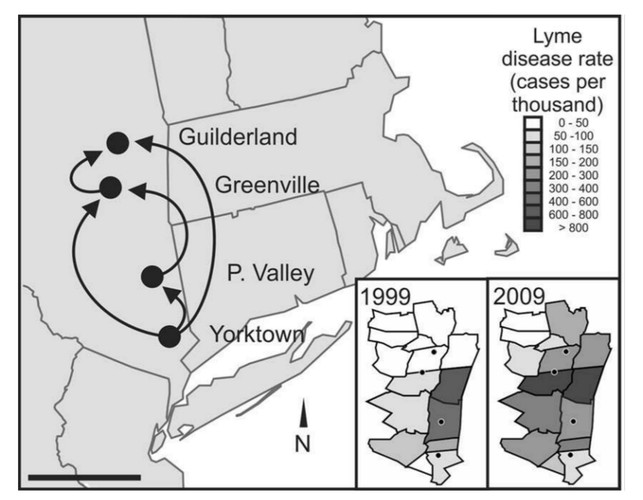 Black-legged ticks, the vectors of Lyme disease, colonized new territories in the Northeastern United States in recent years, mainly by short-distance, south-to-north moves. The patterns closely track the geographic spread of Lyme disease cases in humans.