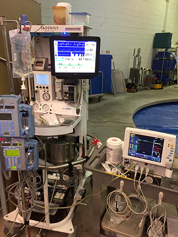 The new research shows the benefits of ventilating horses undergoing surgery with a mixture of helium and oxygen.
