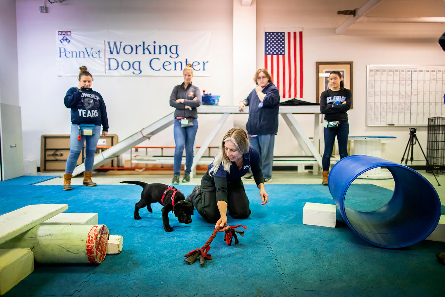 Urban, a three-month-old black Labrador retriever, trains with Danielle Berger at the Penn Vet Working Dog Center. Berger is leading the training for the U litter, composed of Urban and seven of her brothers and sisters, with assistance from interns including (left to right) Charlotte Kronick, Dominique Andrews, Trevor Vidas, and Tesa Stone.